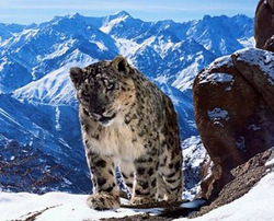 Planet Earth II from BBC will debut in 2016 in 4K UHD