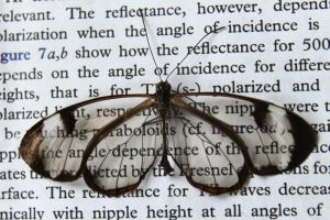 Butterfly Wings: The Key to Glare-Free Displays?