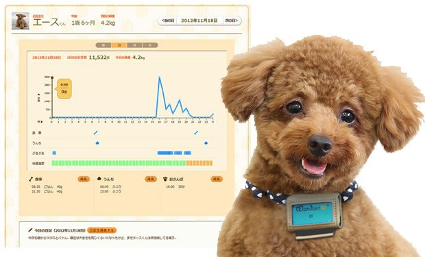 A Pedometer... For the Dogs